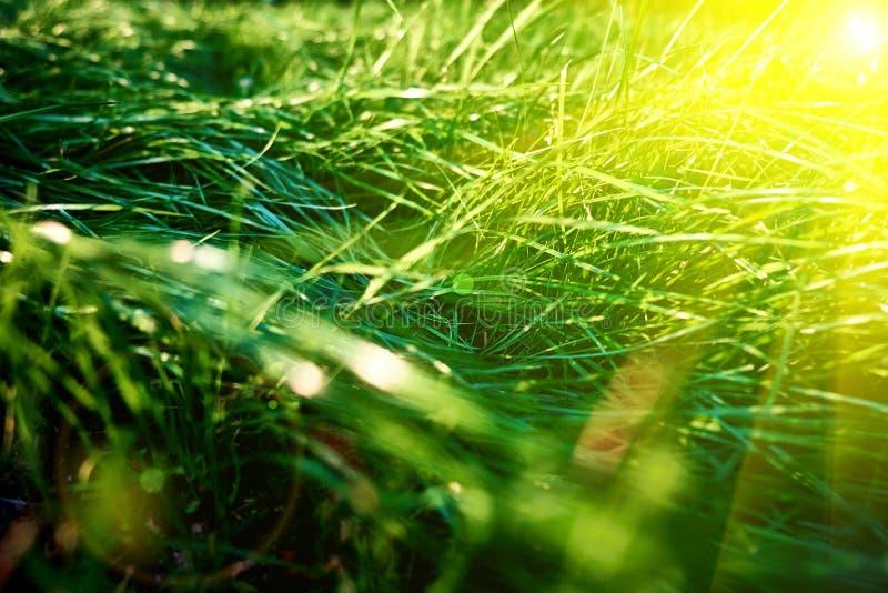 Bakgrund för grönt gräs, den tonade ljusa gräscloseupsikten med solen strålar och linssignalljuset arkivbilder