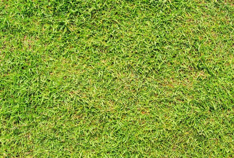 Bakgrund för grönt gräs för kort snitt Bakgrund för foto för fält för grönt gräs Vårbaner av nytt grönt gräs royaltyfri foto