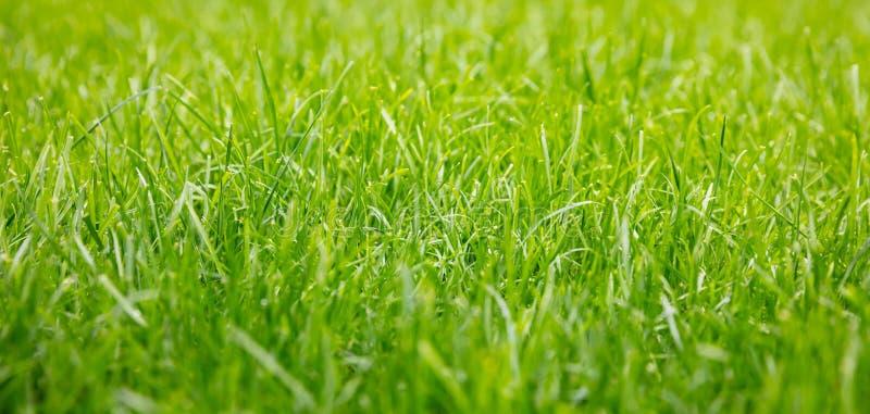 Bakgrund för grönt gräs, textur, solig vårdag Slapp fokus arkivbild