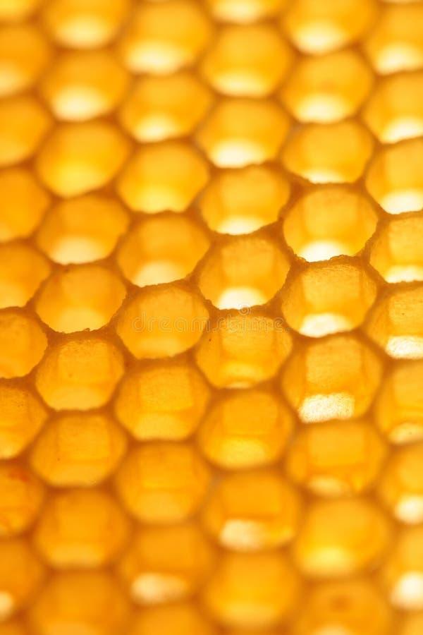 Bakgrund för lodlinje för abstrakt begrepp för honungskakacloseupguling arkivbilder