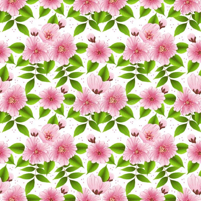 Bakgrund för modell för vektorsakura blomma sömlös Elegant textur för körsbärsröd blomning för bakgrunder royaltyfri illustrationer