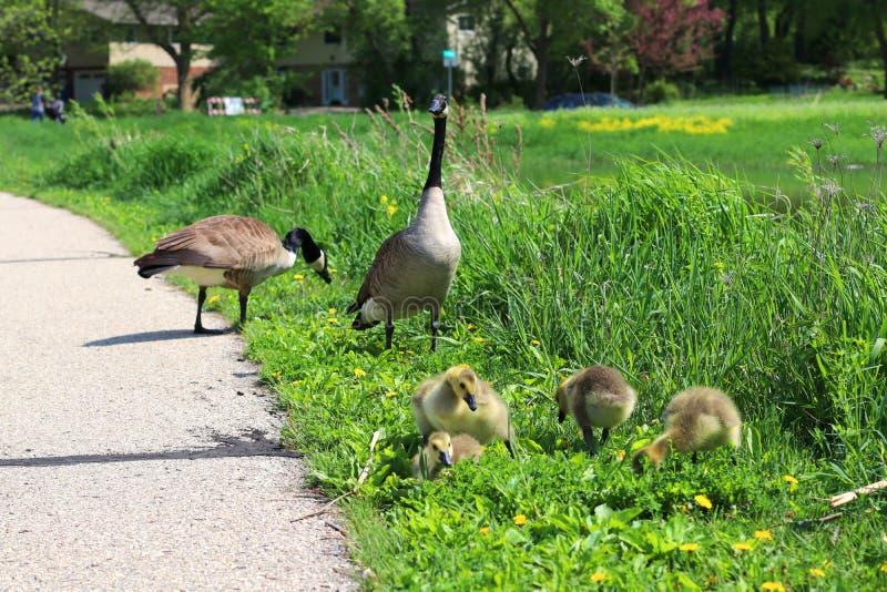 Bakgrund för natur för Midwest vårdjurliv royaltyfri bild
