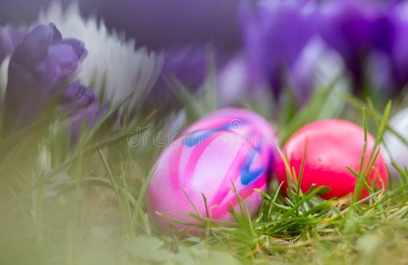 Bakgrund för påskägg och vårblomma royaltyfri foto