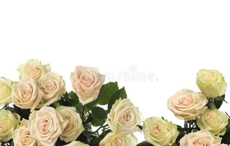 Bakgrund för Rose Flower rambukett arkivfoton