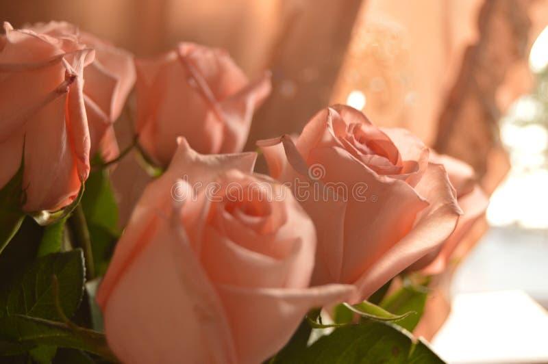 Bakgrund för Rose Many Gentle Pink Buds kronbladbukett arkivfoton