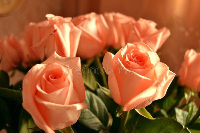 Bakgrund för Rose Many Gentle Pink Buds kronbladbukett royaltyfri fotografi