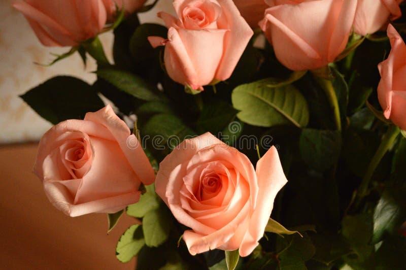 Bakgrund för Rose Many Gentle Pink Buds kronbladbukett arkivbild