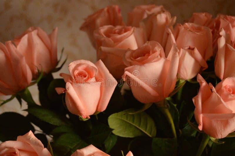 Bakgrund för Rose Many Gentle Pink Buds kronbladbukett arkivbilder