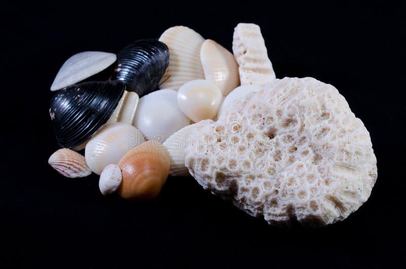 Bakgrund för svart för havsskalordning royaltyfria foton