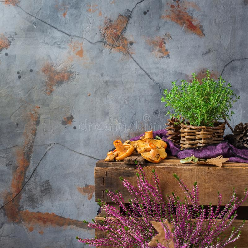 Bakgrund för tacksägelsen för nedgånghösten plocka svamp dekorativ festlig med mjölkaktig saffran fotografering för bildbyråer