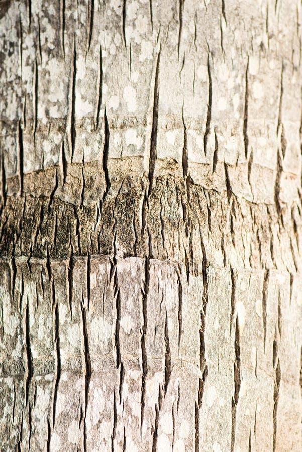 Bakgrund för textur för grovt brunt skäll för palmträd wood naturlig arkivbild