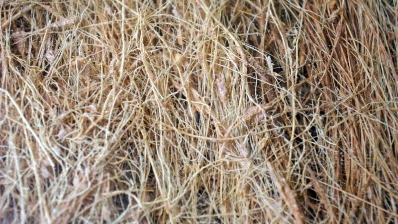Bakgrund för textur för grönsakfibrer arkivbilder