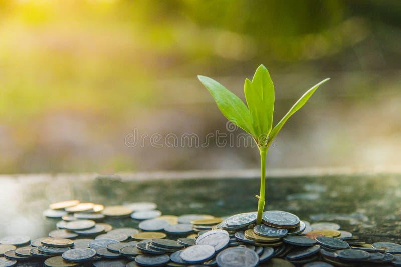 Bakgrund för tillväxtträdgräsplan med svarta claySeedlings som planteras i exponeringsglas med besparingmynt Besparingidéer royaltyfri bild