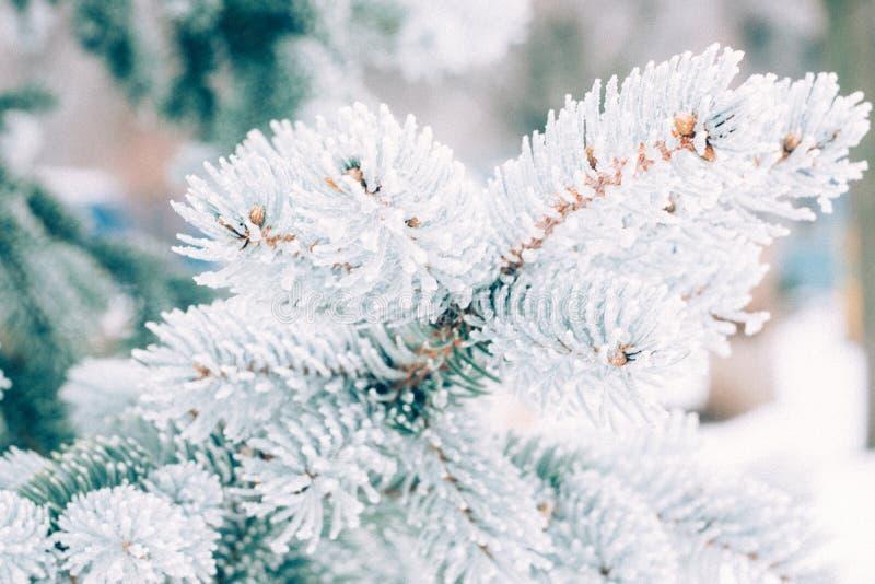 Bakgrund för träd för vinterfrostjul vintergrön Is täckte upp blått prydligt filialslut Frosen filial av granträdet som täckas me arkivfoto