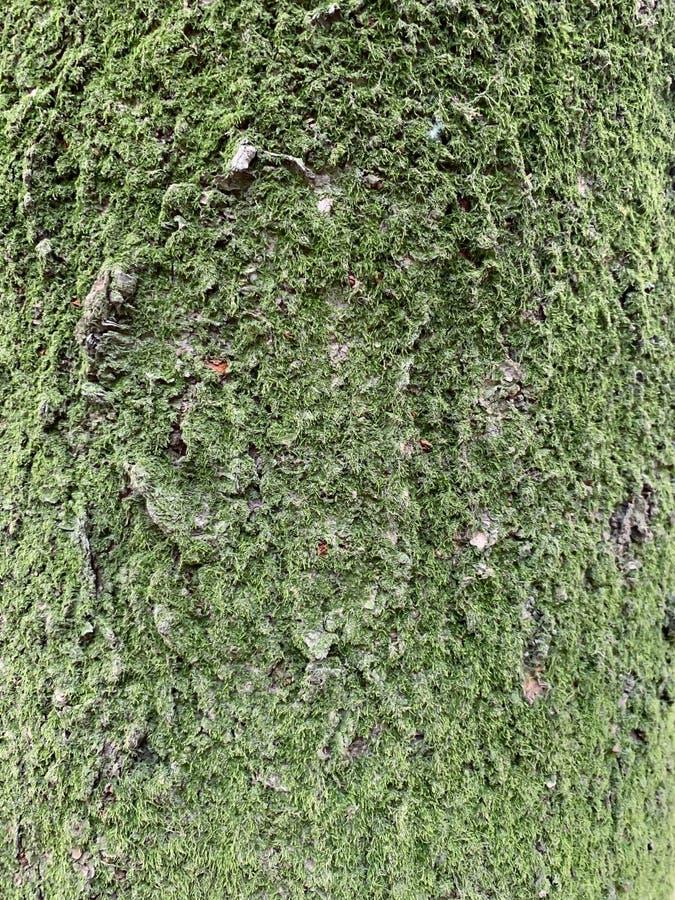 Bakgrund för trädstam och mos- royaltyfri fotografi