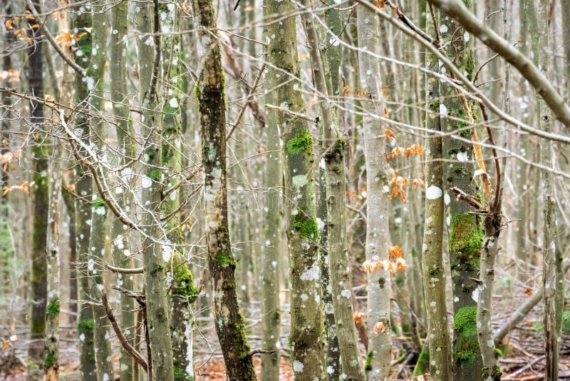 Bakgrund för träskogens textur royaltyfria bilder