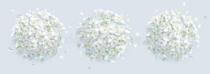 Bakgrund för vanliga hortensior för trädvektor vit stock illustrationer