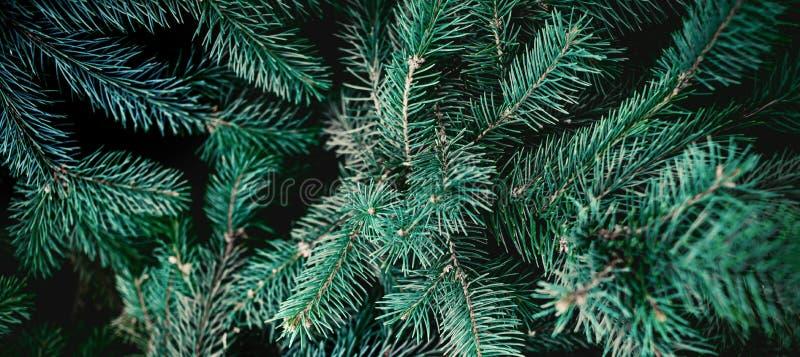 Bakgrund f?r julgrantr?d Sörja trädfrunchslutet upp gr?n spruce arkivbilder