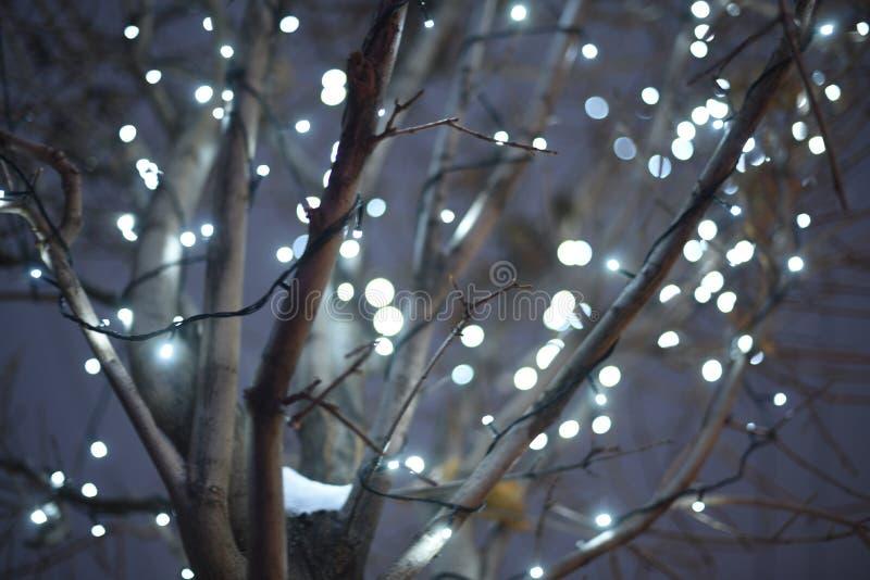 Bakgrund f?r julljus Dekorerade trees Glödande bakgrund för ferie på det mörkt - blå natthimmel defocused bakgrund _ arkivbilder