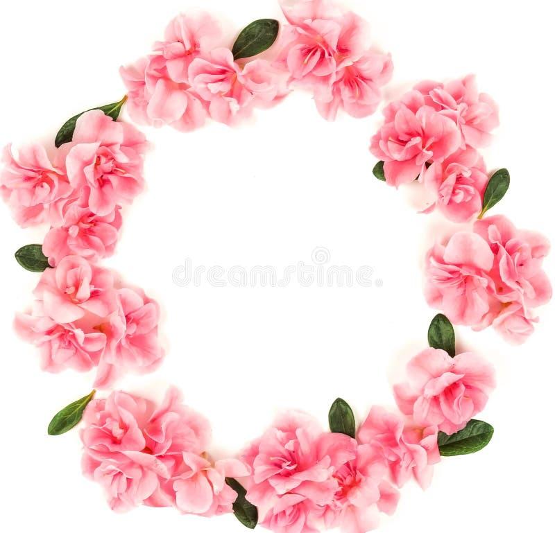 Bakgrund f?r kransblommasammans?ttning Rosa ram för blommaazaleamodell arkivfoton