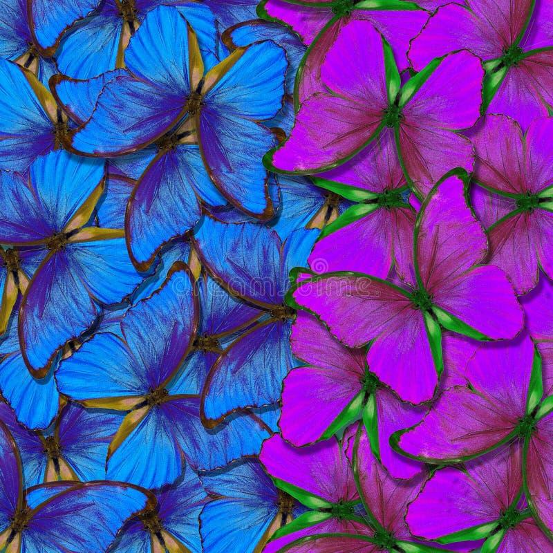 Bakgrund f?r Morpho fj?rilstextur blå och purpurfärgad naturlig abstrakt bakgrund fj?rilsvingar i flykten vektor illustrationer