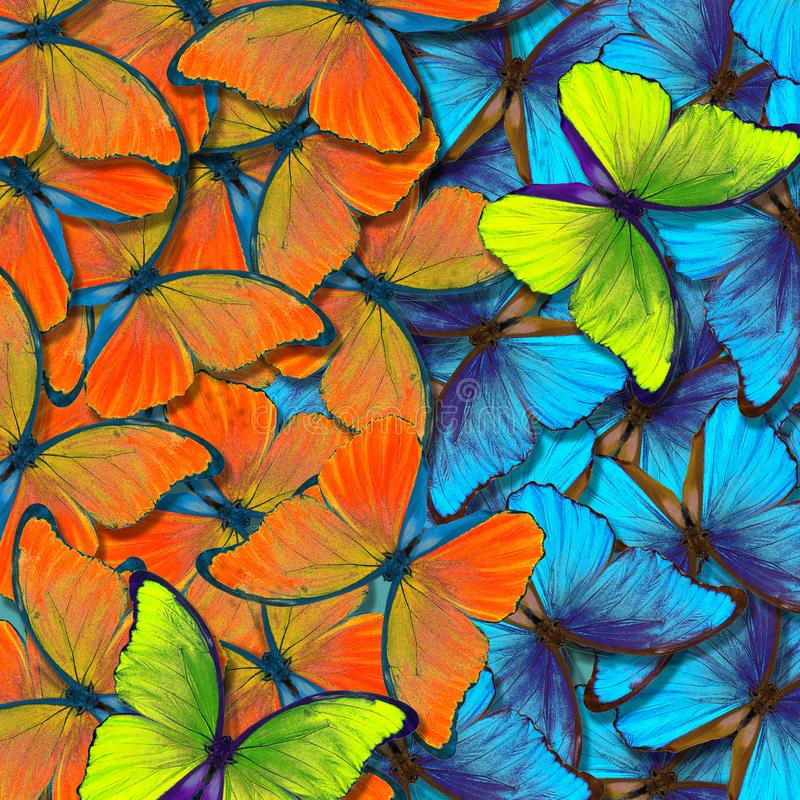 Bakgrund f?r Morpho fj?rilstextur F?rgrik naturlig abstrakt bakgrund fj?rilsvingar i flykten vektor illustrationer