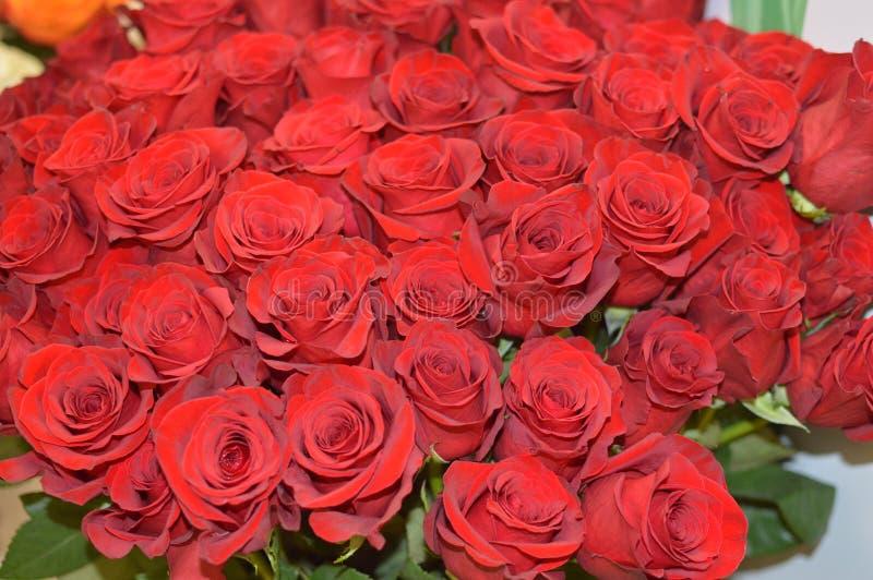 Bakgrund från identiska röda rosor arkivfoton