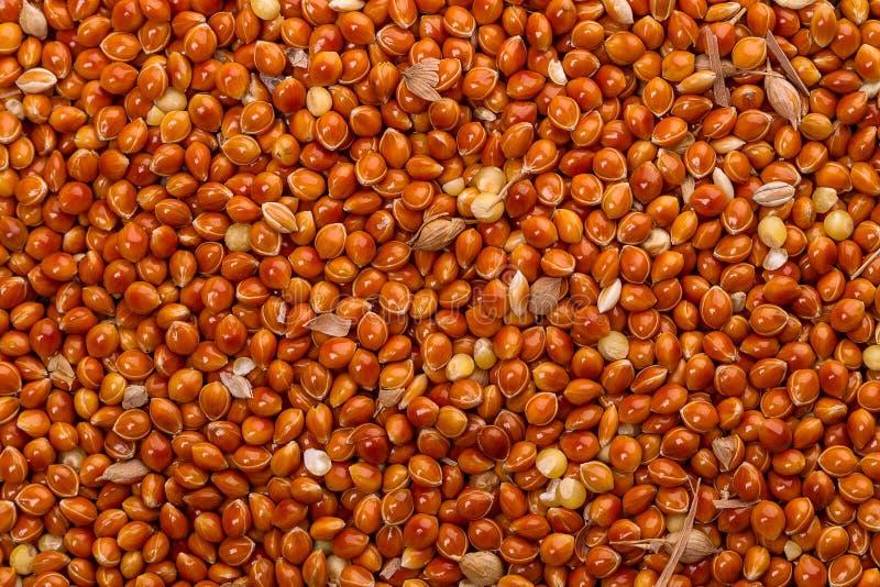 Bakgrund från korn av millet royaltyfria bilder