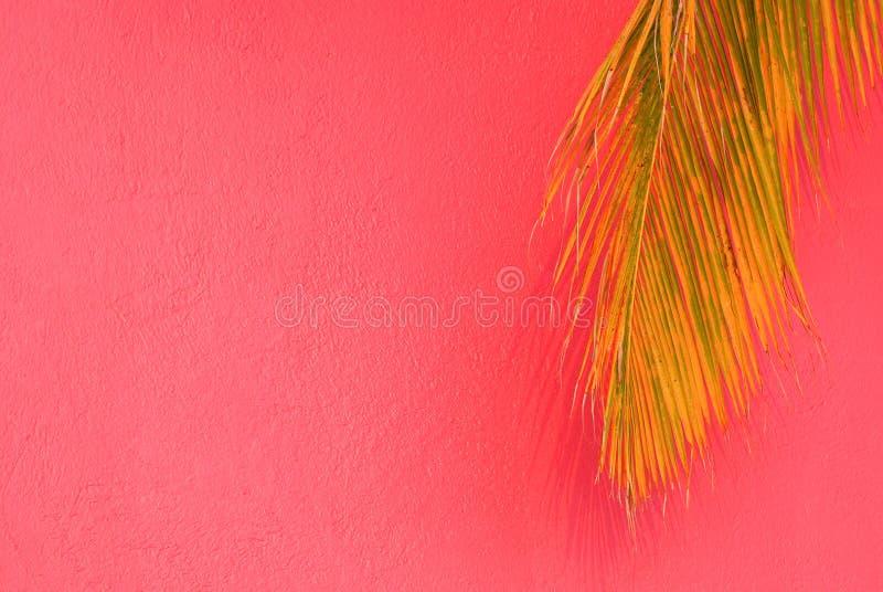 bakgrund gömma i handflatan den tropiska rosa treen royaltyfri fotografi