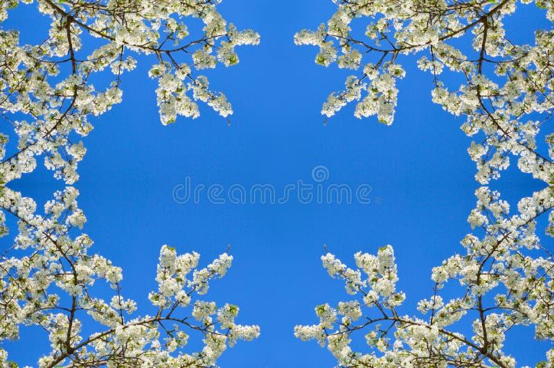bakgrund isolerad fjädertreewhite royaltyfri foto