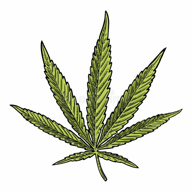 bakgrund isolerad leafmarijuanawhite Svart gravyrillustration för tappning royaltyfri illustrationer