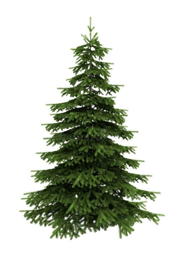 bakgrund isolerad spruce treewhite royaltyfri illustrationer