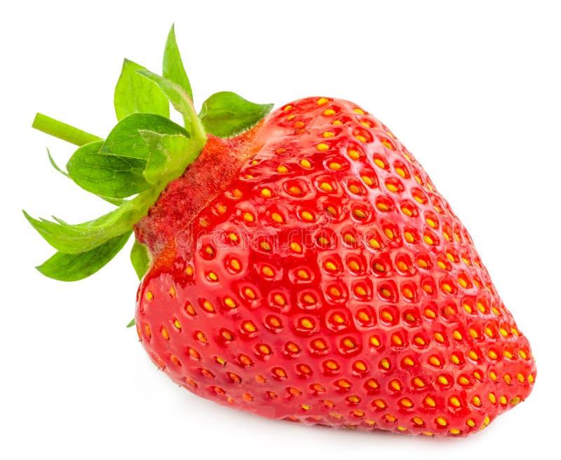 bakgrund isolerade jordgubbewhite Snabb bana arkivfoto