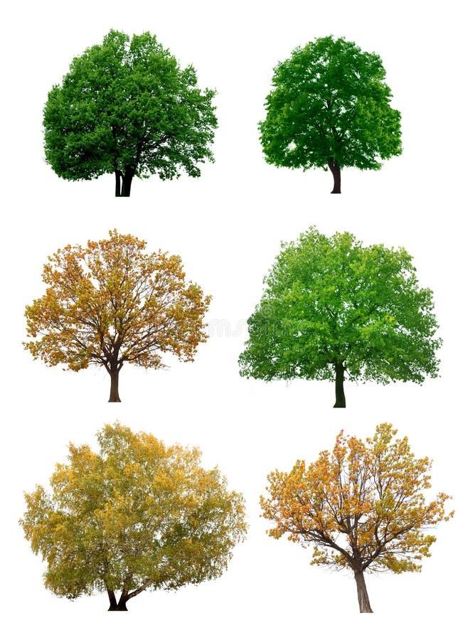 bakgrund isolerade vita trees fotografering för bildbyråer