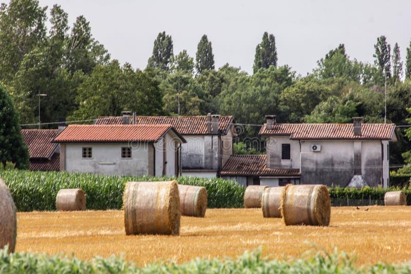 Bakgrund lantgård med odlingsmark- och höskörden i guld- baler arkivfoto