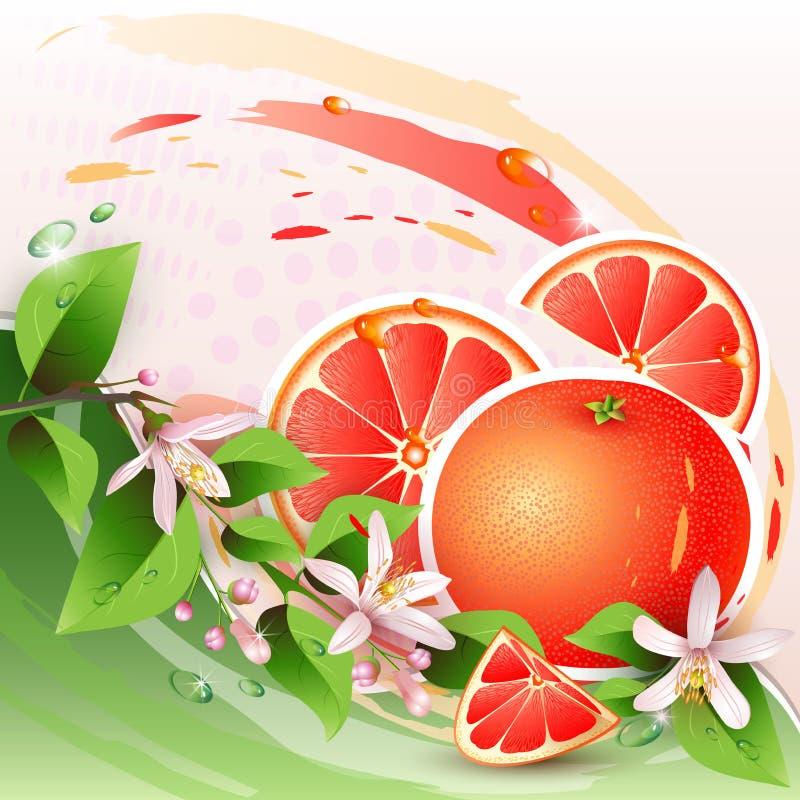 Bakgrund med den nya grapefrukten stock illustrationer