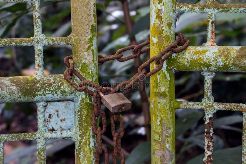 Bakgrund med en gammal hänglås på en rostig tung kedja på ett staket för metalltappningport som täckas med grön mossa vita begrep arkivfoto