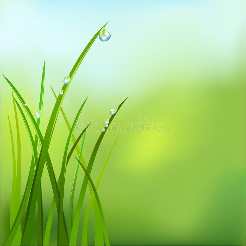 Bakgrund med gräs och dagg royaltyfri illustrationer