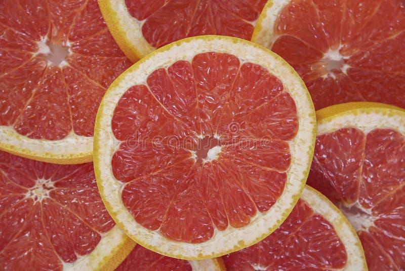 Bakgrund med grapefruktskivor royaltyfri bild