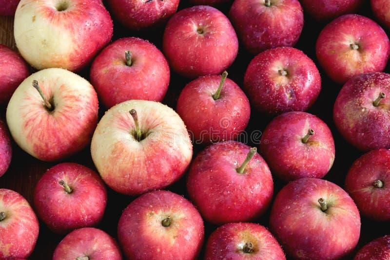 Bakgrund med härliga små äpplen för liten äppleträbakgrund skördar bakgrund över royaltyfri foto