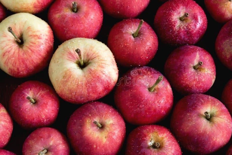 Bakgrund med härliga små äpplen för liten äppleträbakgrund skördar bakgrund över royaltyfria bilder