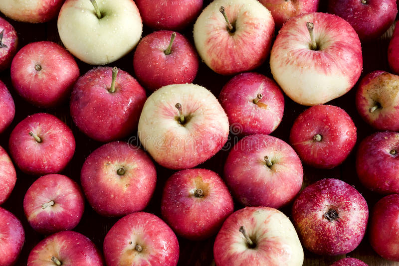 Bakgrund med härliga små äpplen för liten äppleträbakgrund skördar bästa sikt för bakgrund royaltyfri fotografi