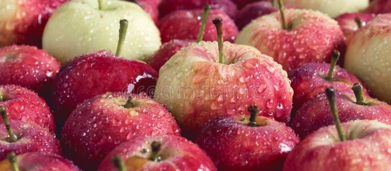Bakgrund med härliga små äpplen för liten äppleträbakgrund skördar bakgrund som tonas länge arkivfoto
