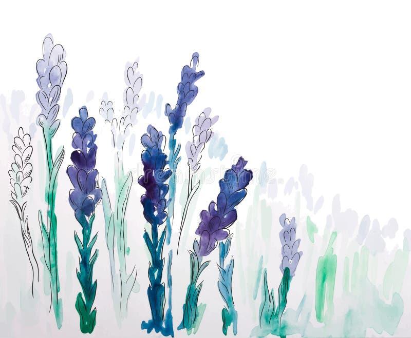 Bakgrund med hand målad vattenfärglavendel vektor illustrationer