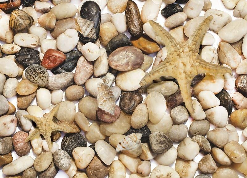 Bakgrund med många olika kulöra stenar, sjöstjärnan och skal royaltyfria bilder