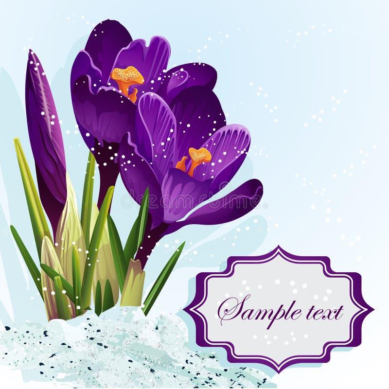 Bakgrund med purpurfärgade krokusar i snowen-EPS10 royaltyfri illustrationer