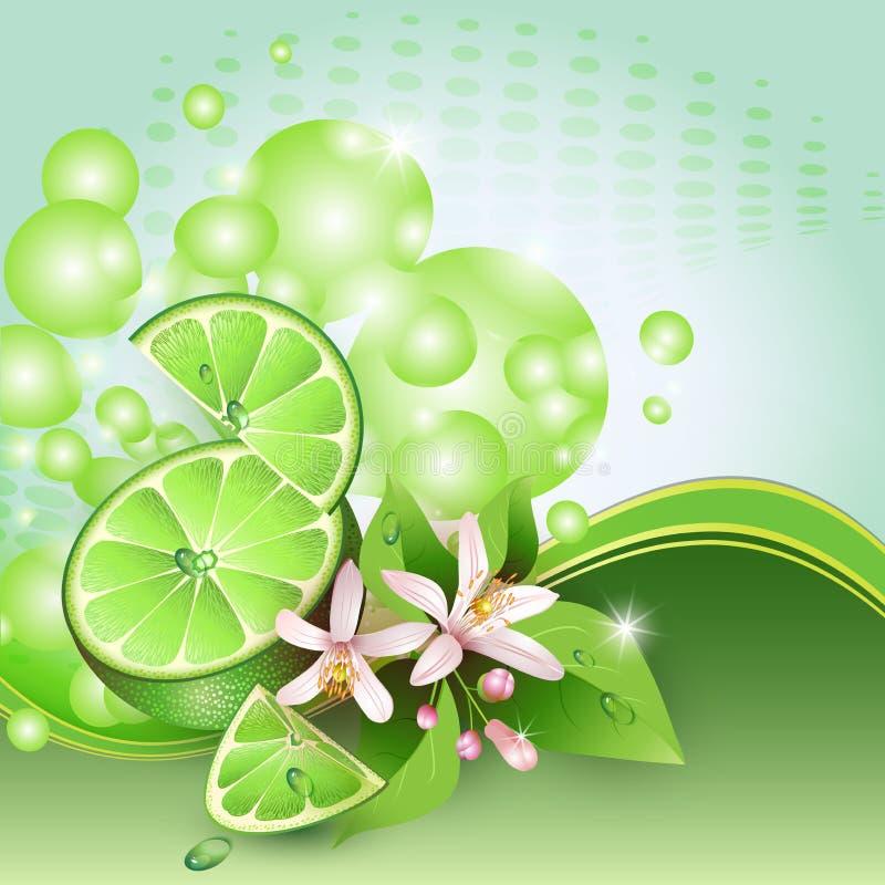 Bakgrund med saftiga skivor av limefruktfrukt vektor illustrationer