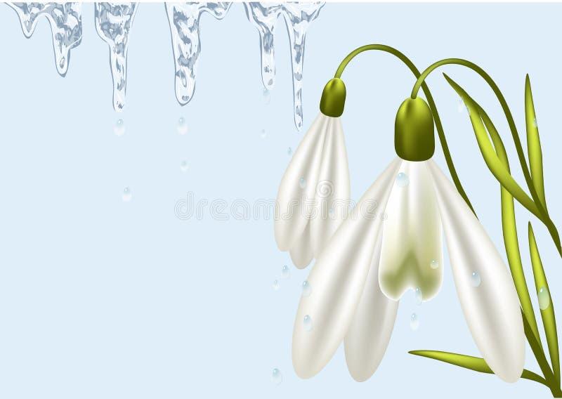 Bakgrund med snödroppe royaltyfri illustrationer