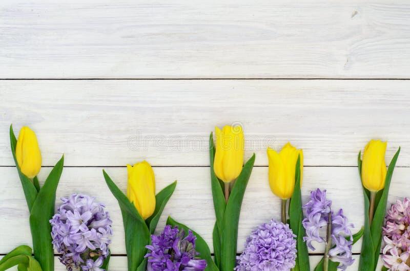 Bakgrund med tulpan och hyacinter royaltyfri fotografi
