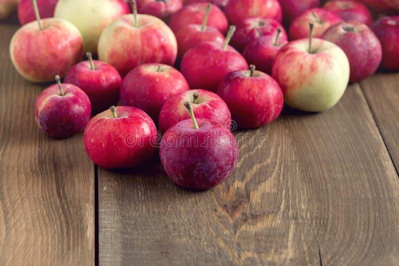 Bakgrund med utrymme för kopia för bakgrund för skörd för äpplen för liten äppleträbakgrund härligt litet royaltyfri bild